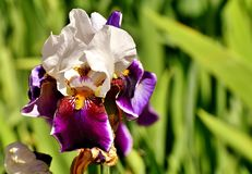 Flower, Flowering Plant, Plant, Purple stock images