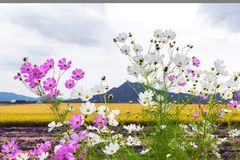 Flower, Flowering Plant, Plant, Spring stock images