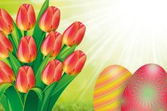 Flower, Flowering Plant, Plant, Tulip stock photos
