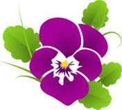 Flower, Flowering Plant, Plant, Violet Stock Images