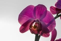 Flower, Flowering Plant, Purple, Violet Stock Images