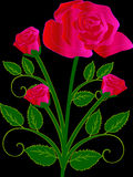 Flower, Flowering Plant, Rose Family, Pink Stock Photo