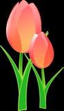 Flower, Flowering Plant, Tulip, Plant royalty free stock image