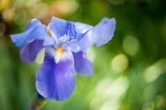 Flower, Flowering Plant, Wildflower, Petal