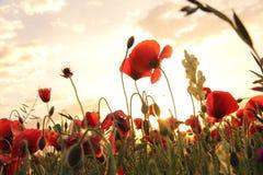 Flower, Flowering Plant, Wildflower, Sky royalty free stock image