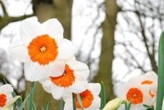 Flower, Flowering Plant, Wildflower, Spring royalty free stock photo