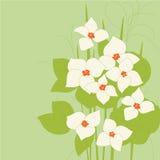 Flower_flowering Royalty Free Stock Photo