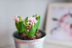 Flower in flowerpot and photo. Home decoration. Closeup stock photo
