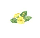 Flower flowers. Hand drawn yellow Primroses, typical vernal flower. Nice illustration. Coloured pencils and ink Royalty Free Stock Photos