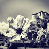 Flower. The flowers in front of potala palace Royalty Free Stock Photography
