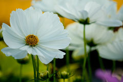 Flower. S the morning feeling refreshed Royalty Free Stock Photo