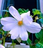 Flower. S, nature, blumen, vihte stock images