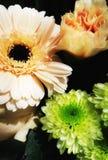 Flower. S of spring Stock Image