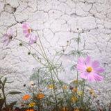 Flower. The flowers in Tibet in summer Stock Image