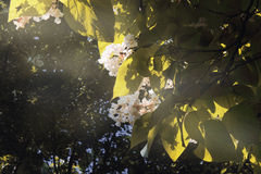 Flower3. Flowers in a tree, grate sunlight Royalty Free Stock Photos