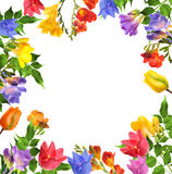 Flower. Floxia. Flowers on white background. Floxia. Frame Royalty Free Stock Image