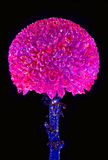 Flower with fluorescent colour. Stock Photos