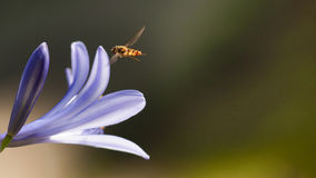Flower with flying insect Stock Photo