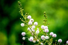 Flower in Focus. Life and Beauty royalty free stock photo