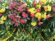 Flower. Foliage Stock Photo