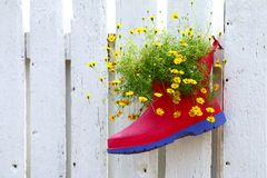 Flower in foot. Hang on white fence Royalty Free Stock Photo