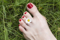 Flower and foot with red nail polish 1 Stock Images