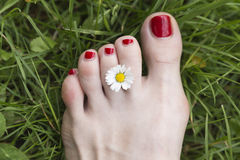 Flower and foot with red nail polish 2 Royalty Free Stock Image
