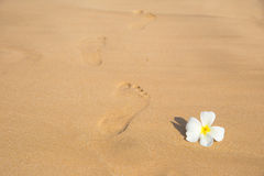Flower and footprint Stock Photo