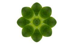 Flower form leaf Royalty Free Stock Image