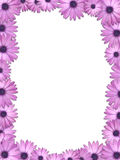 Flower frame. Frame from beautiful violet flowers Royalty Free Stock Image