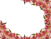 Flower frame. Floral frame of lily flower over white stock photos