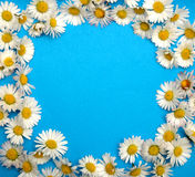 Flower frame with Stock Image