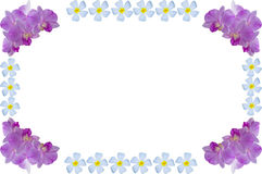 Flower frame Stock Photography