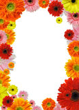 Flower frame. Colorful flower frame isolated on white background Royalty Free Stock Photography