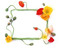 Flower Frame-2. This is a White Background Flower Frame Stock Image