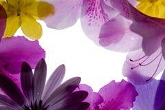 Flower Frame. Against White Background Stock Image