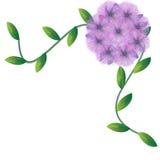Flower of frame. On white background Stock Images