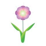 Flower of frame. On white background Royalty Free Stock Photo