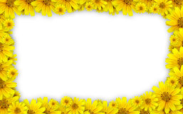 Flower frame. Coreopsis lanceolata (tickseed) used for floral frame with white background stock images
