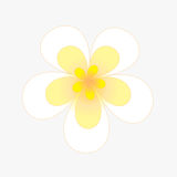 Flower of frame. On background Royalty Free Stock Photos