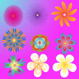 Flower of frame Stock Images