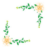 Flower of frame. On white background Royalty Free Stock Photography