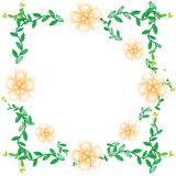 Flower of frame. On white background Royalty Free Stock Images