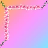 Flower of frame. On background Stock Images