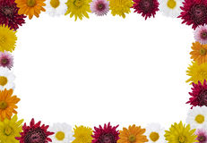 Flower frame. Different colors flower frame , white background Royalty Free Stock Photo
