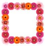 Flower frame. Different colors flower frame border Stock Photos