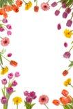 Flower Frame. Beautiful flower frame on white background Stock Photos