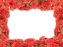 Flower frame. Flower photo frame  red flowers Stock Photo