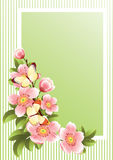 Flower frame Stock Images
