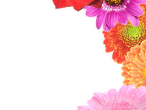 Flower frame. Frame, made up of colorful flowers.  White background Royalty Free Stock Photo